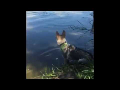 Первое купание в открытой воде.
