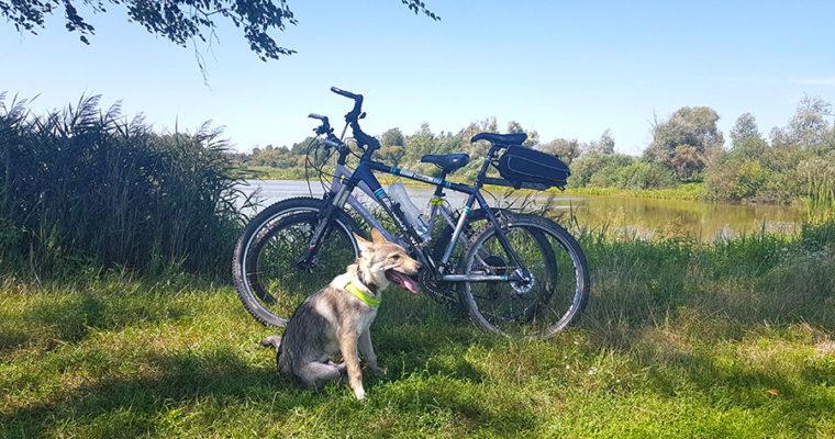 Тренировка на велосипедах 11+6 км.