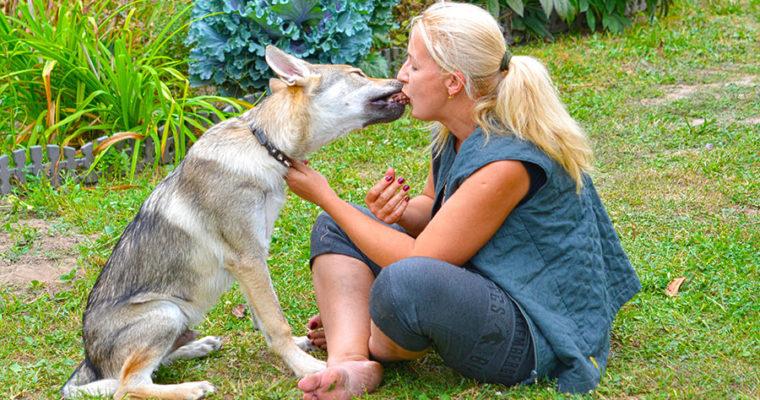 Поцелуй волка