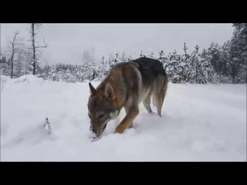 Прогулка по лесу после снегопада.