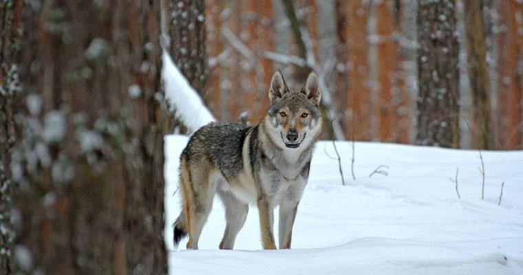 Первый снег, прогулка в лесу.
