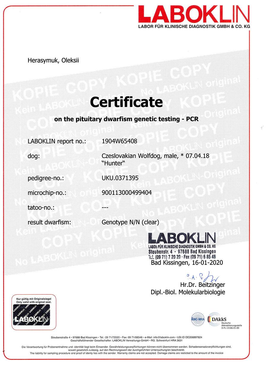 Сертификат Тест на карликовость Dwarfism