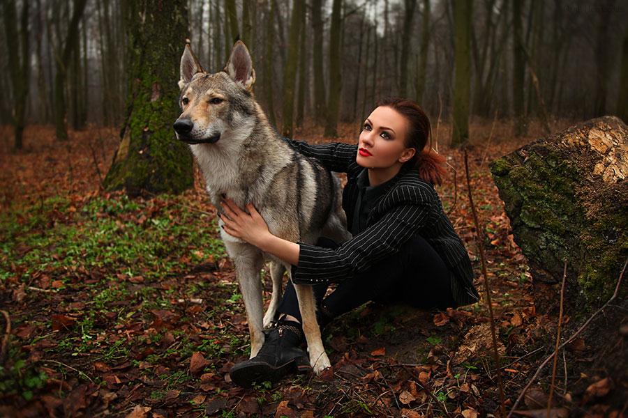 wolf and beautiful stranger