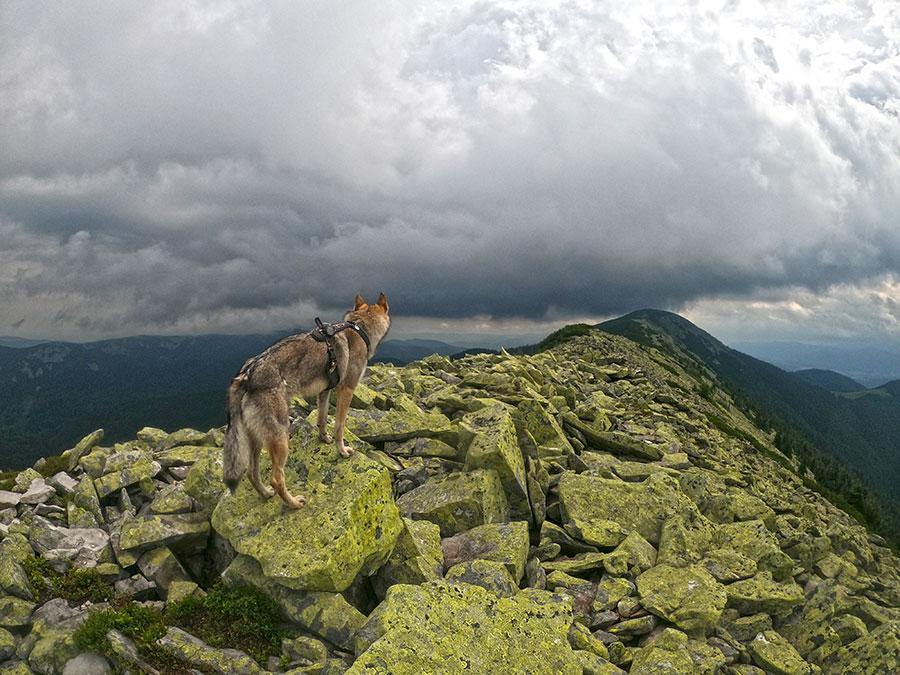 Синяк высокая гора в Горганах Высота 1665 м