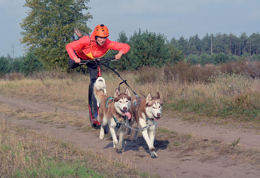 дог-скутеринг две собаки