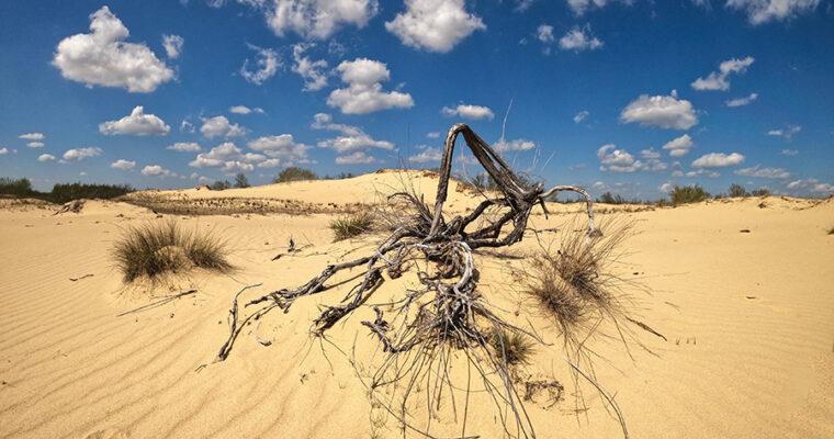 Через пустыню Олешковские пески.