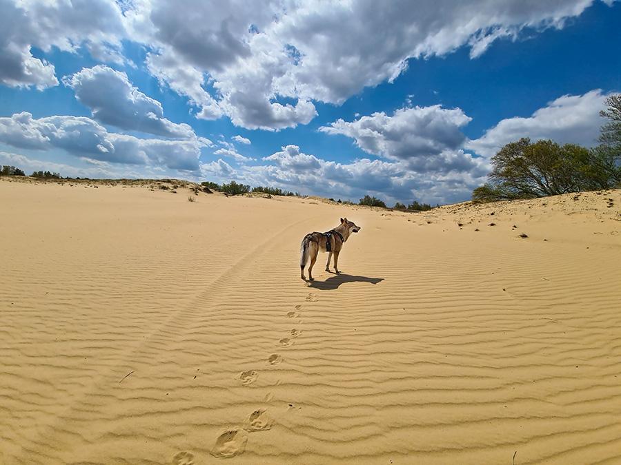 Жара в пустыне