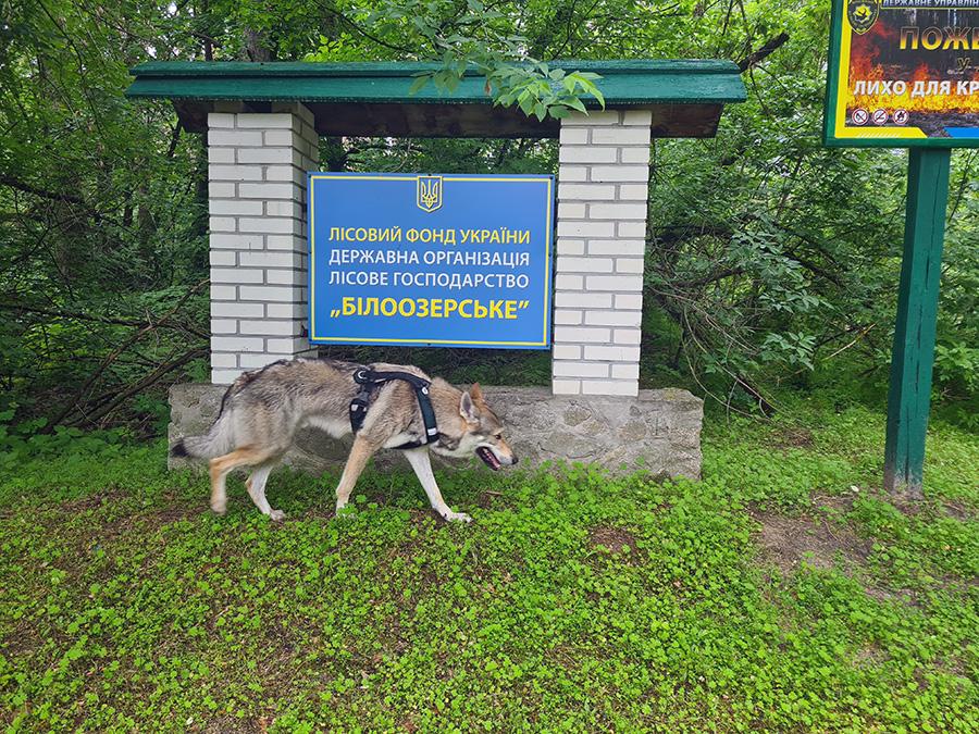 beloozersky park