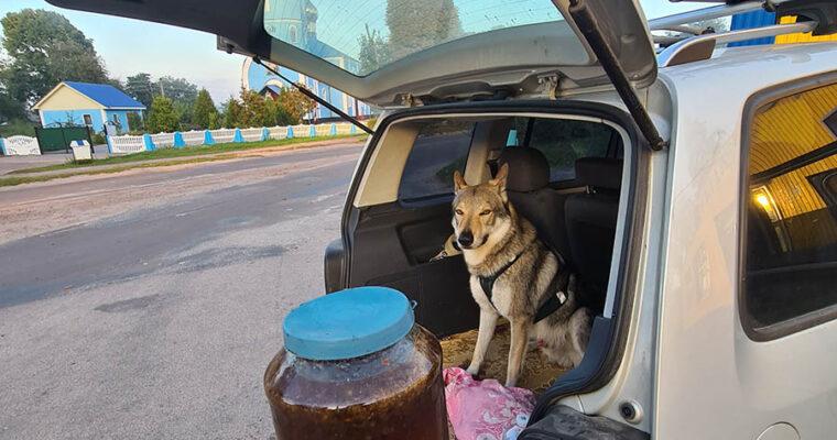 В Полесский заповедник за диким мёдом
