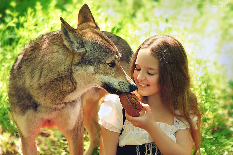 Девочка и волк в рубрике фотосессия с волком часть три