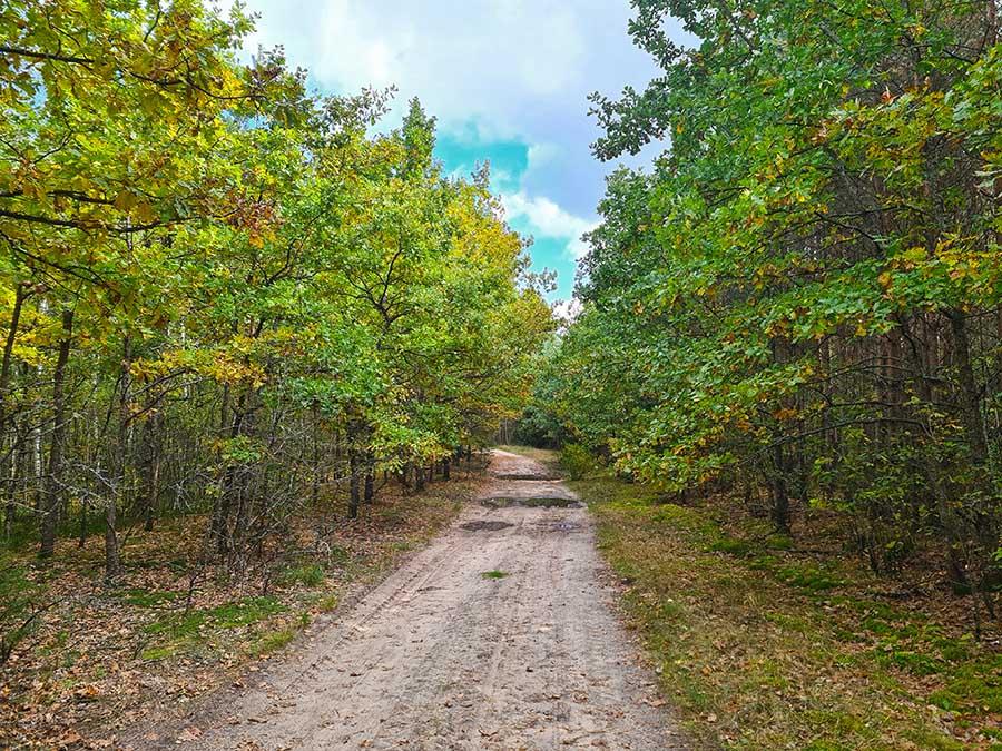 Лиственный лес в окрестностях Шепетовки