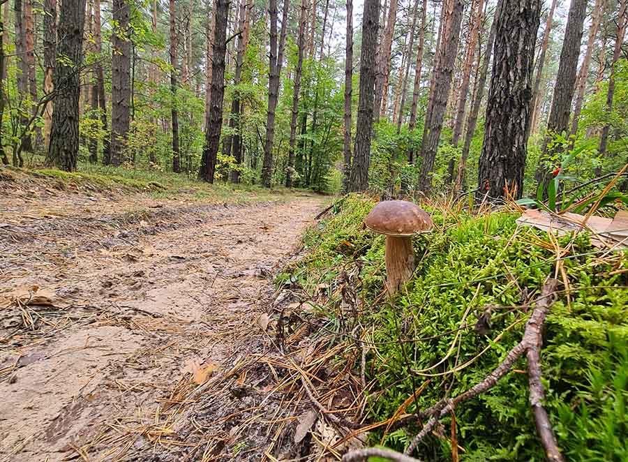 грибное место в окрестностях Шепетовки