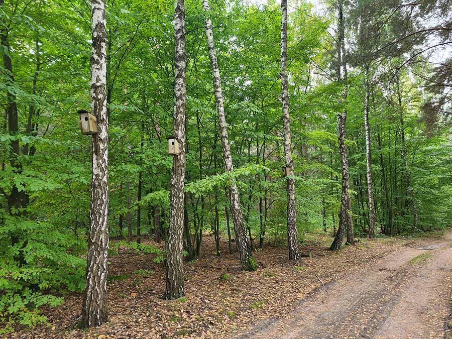 скворечник в лесу