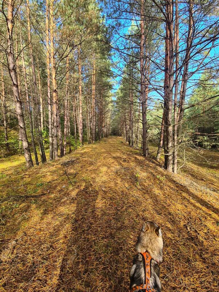 Старая дорога в окрестностях Шепетовки